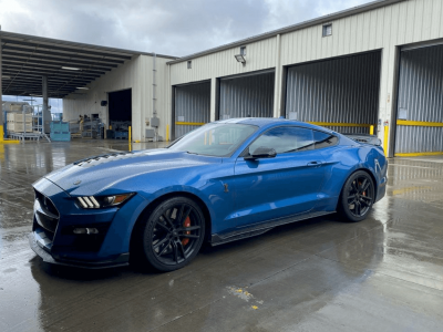 mustang shelby window tinting